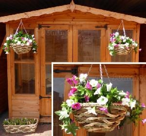 SHEDS xx - Hanging baskets and planters